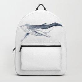 Baby humpback whale (Megaptera novaeangliae) Backpack