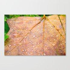 On a Rainy Monday Canvas Print