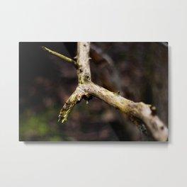 Branch Photo Metal Print