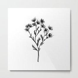 Wild Carrot Wildflower Metal Print