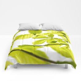 Aesculus horse chestnut foliage Comforters