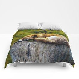 Cozy Spot Comforters