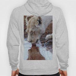 White lion drinking rain water Hoody