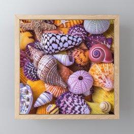 seashell Framed Mini Art Print
