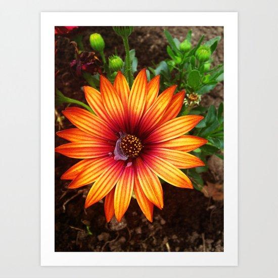 The Flower Sun Art Print