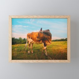 Happiness Is A Flirting Cow Framed Mini Art Print