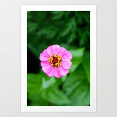low depth of field flower Art Print