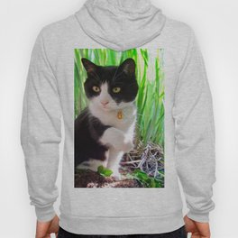 Orazio and the princess frog Hoody