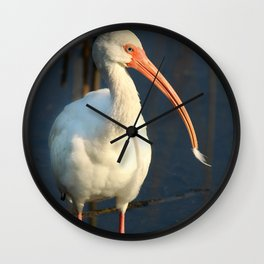 American Ibis Wall Clock
