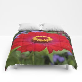 Red zinnia - blazing ring of fire Comforters