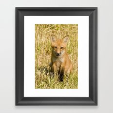 Red Fox kit Framed Art Print