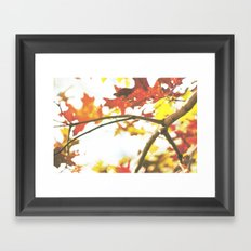 Colors of Autumn Framed Art Print