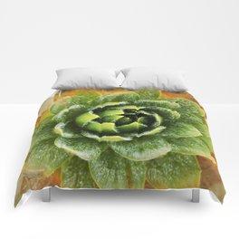 Frailejon. Comforters