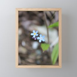 Two Forget-Me-Nots Framed Mini Art Print