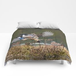 Jay reflections Comforters