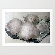 Furry Crystal  Art Print