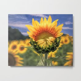 Blooming Sunflower with Sky - Textured Metal Print