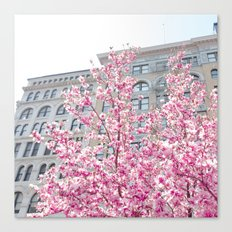 NYC Cherry Blossoms Canvas Print