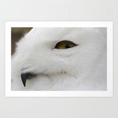 Snowy owl head Art Print