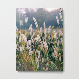 Field of Wild Weeds Morning Glow Metal Print