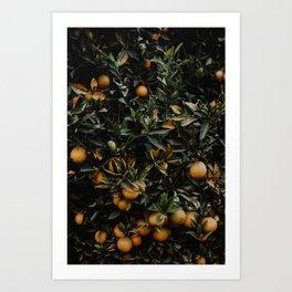 Wild Oranges Art Print