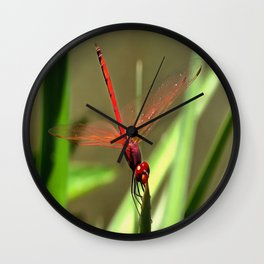 Beautiful Firecracker Dragonfly Wall Clock