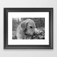 Classic Dog Framed Art Print