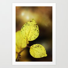yellow leaves. Art Print