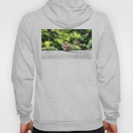 Little Feather Tasting Hoody