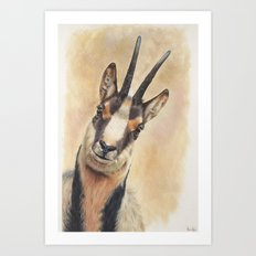 chamois Art Print