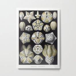 Blastoïdea–Knospensterne from Kunstformen der Natur (1904) by Ernst Haeckel. Metal Print
