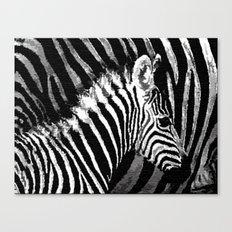 ZEDbra Canvas Print