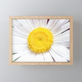Daisy Flower Close-Up #1 #art #society6 Framed Mini Art Print