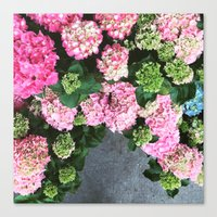 hydrangea Canvas Prints featuring Hydrangea  by Chelsea Victoria
