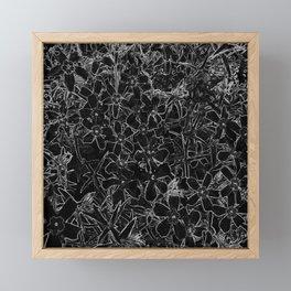 Flower   Flowers   Black and White Flox Graphic Framed Mini Art Print