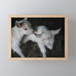 One day old Framed Mini Art Print