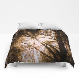 Sunlit Dreams Comforters