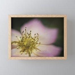 Pink Wild Rose Framed Mini Art Print