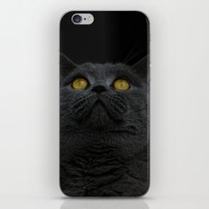 Look Up - Black Cat iPhone & iPod Skin