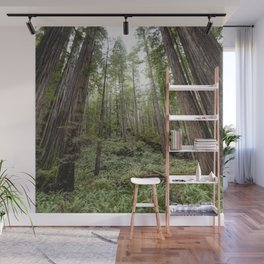 Fern Alley - Redwood Forest Nature Photography Wall Mural