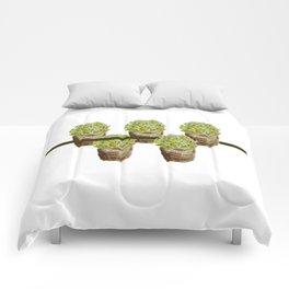 contradiction harmony Comforters