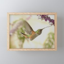 Ms. Hummingbird Checks Another Nectar Source Framed Mini Art Print