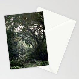 Misty Jungle Morning  Stationery Cards