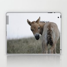Baby Przewalski's Horse Laptop & iPad Skin