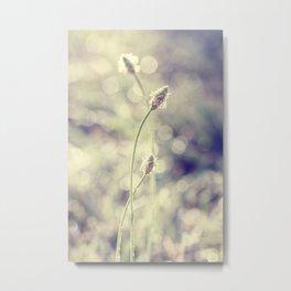 morning weeds Metal Print