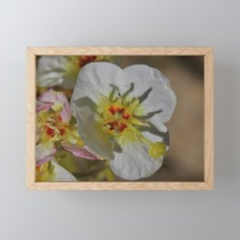 Smallest Desert Wildflower Blossoms by Reay of Light Photography Framed Mini Art Print