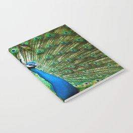 Beautiful Male Peacock Notebook
