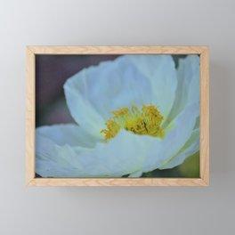 White Poppy of Peace by Reay of Light Framed Mini Art Print
