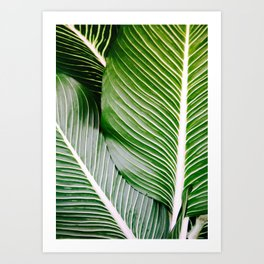Big Leaves - Tropical Nature Photography Art Print