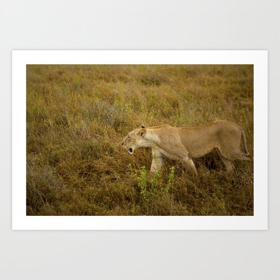 Lion in the wild. Art Print